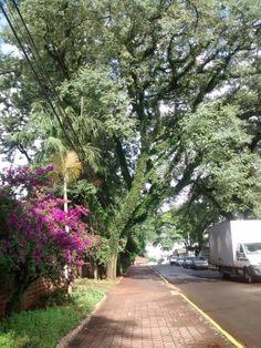 Apucarana em Paraná