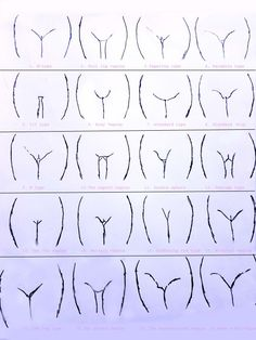 Classified In 21 Shapes Here We Have Given A Clear Idea Of Every Specific Type Of Vagina In Detail Every Vagina Is Different In Its Shape And Size