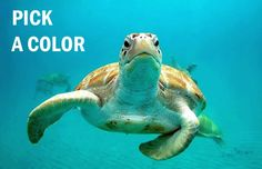 Which Species Of Sea Turtle Are You