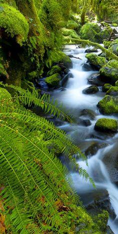 http://www.greeneratravel.com/  Fiddlehead Fern, Westland National Park, New Zealand