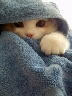 Most current Photo baby animals kittens Tips While all of our mom and dad are most likely content in addition to treated to check out you get older plus release som Cute Kittens, Fluffy Kittens, I Love Cats, Crazy Cats, Cute Baby Animals, Funny Animals, Little Kitty, Smiling Dogs, Dog Eyes