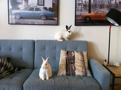 The sofa is overrun with bunnies! - September 19, 2012