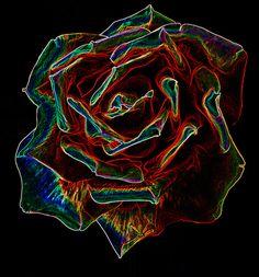 Electric Rose by Dalton54, via Flickr