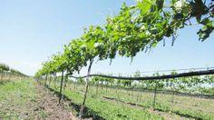 Belle Fourche, SD  -- Belle Joli Winery