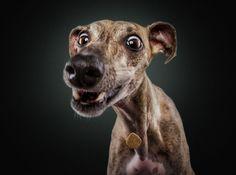 Fotograaf maakt foto's van honden terwijl ze iets lekkers proberen te vangen - Hetdelenwaard.nl