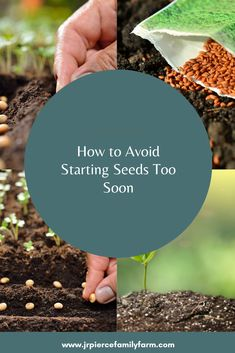 If you accidentally started your seeds too soon, don't worry. Here are some tips - as well as how you can prevent doing this in the future. Container Gardening, Gardening Tips, Vegetable Gardening, What Happens If You, Shit Happens, Too Soon, Farm Projects, Urban Homesteading, Growth Hormone