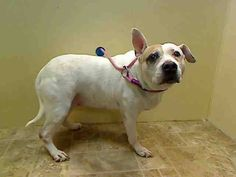 My name was DIVA. My Animal ID# was A0991514. I died because no one wanted the love I could give. I died in terror and in fear, I died alone. Not Alone, I will walk and run and play in the Heavens Above.