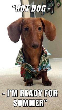Summer hot diggity dog!