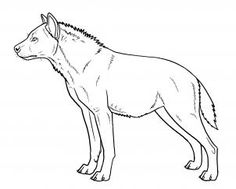 how to draw hyenas step 15