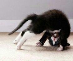 Just doing my yoga.