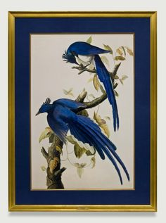 Audubon Columbia Jays are featured in a hand-wrapped navy fabric mat and gold frame. Framed to conservation standards with archival materials.