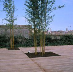 Giardini pensili a Venezia
