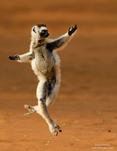 He's been working on his dance routine for weeks! 10 Animals Who Are Striking a Pose For You.