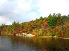 Autumn foliage at Deer Cove at Camp #Yawgoog! This rare view was made possible by a very low water level.  On the Yellow and Narragansett trails.  A 2014 image by David R. Brierley.