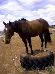 Pedastool for horses. Trail Riding Horses, Horse Riding Tips, Horse Tips, Extreme Trail, Horse Arena, Horse Therapy, Horse Exercises, Horse Games, Horse Training
