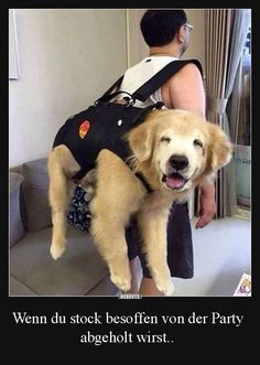 Cute Overload: Internet`s best cute dogs and cute cats are here. Aww pics and adorable animals. Funny Animal Pictures, Cute Funny Animals, Funny Dogs, Animal Pics, Funny Images, Funny Photos, Cute Puppies, Cute Dogs, Dogs And Puppies