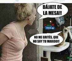 Cute Animal Memes, Cute Animals, Cat Memes, Funny Memes, Don Meme, Spanish Humor, Sarcasm, Funny Pictures, Romance