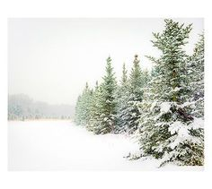 Snow Scene Framed Print by Cindy Taylor - could be a good one for winter or basement decor