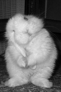 2 Cute for Words | Fluffy Bunny