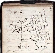 1837 - El primer esbozo del árbol de la vida dibujado por Charles Darwin