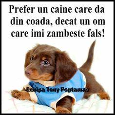 Sad, Puppies, Watch, Funny, Dogs, Life, Impressionism, Cubs, Clock
