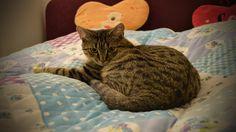 Schnucki beobachtet mich beim einräumen vom Kleiderschrank. Er sieht sich direkt an, welche Ecken gut zum schlafen und sich verstecken sind, damit er im Anschluss direkt hinein huschen kann. Viel Spaß beim ansehen (^.^)  My Channel:  https://www.youtube.com/user/kaninchenfanlucky/  Please subscribe me for more pet action:  http://www.youtube.com/subscription_center?add_user=kaninchenfanlucky   #cats #katzen #neko #cat #katze #youtube