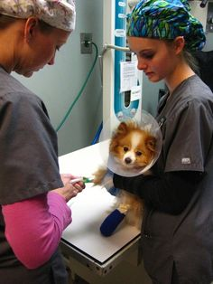 During National Veterinary Technician Week (NVTW) October 13-19, 2013, the American Veterinary Medical Association (AVMA) reminds everyone how important veterinary technicians are to the veterinary health care team. #veterinary#dogs#pets#animals