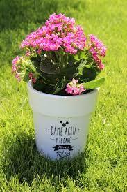 Resultado de imagen para es mejor regalar flores en macetas