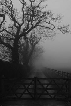Fog settles gently against the ground, wrapping its ethereal tendrils around whatever is in its path, soothing and healing with its quiet, loving energy. Fog is kind. Beautiful World, Beautiful Places, Beautiful Pictures, Arte Obscura, Belle Photo, White Photography, Mists, Paths, Silhouettes