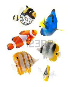 pesce, pesci di barriera, pesci marini partito isolato su sfondo bianco Archivio Fotografico