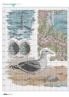 Wasservögel 3