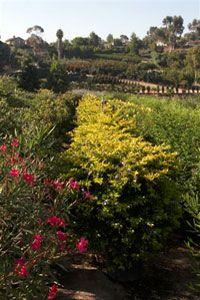 Briggs Tree Company | Discounted Plants & Palms on Poinsettia Ave., Vista