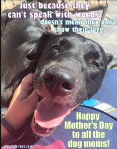 Happy Mothers Day from your 4 legged babies http://lab-rescue.org