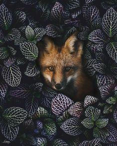 "62.3k Likes, 382 Comments - 🌎 🌎 🌎 Earthpix 🌍🌏🌎 (@earthpix) on Instagram: ""Hiding spot 🦊 Photo by @d_fordesign"""