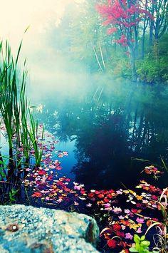 The Mist's Fodder, Stowe, Vermont - Photo: Katya Horner