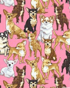 Just Chihuahuas - Quilt Fabrics from www.eQuilter.com