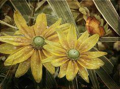 #faabest Barbara Orenya http://fineartamerica.com/featured/green-eyed-susie-barbara-orenya.html#comment7220002