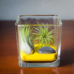 The Air Plant Desktop Zen Garden is great accent to brighten your home or office. Customize by picking your favorite color sand to match your individual style. Air Plant Worlds - Air Plant Desktop Zen Garden, $22.00 (http://www.airplantworlds.com/air-plant-desktop-zen-garden/)