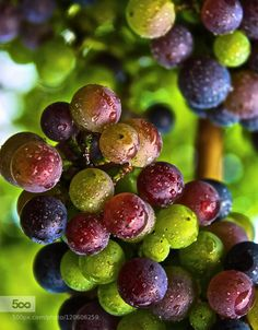2015 Crop POV by odetteholty  IFTTT 500px 2015 abundant beautiful beauty blue closeup colors crop food fresh fruit full grapes g