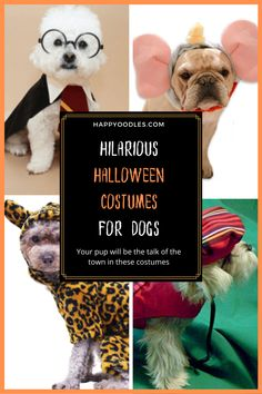 Halloween isn't just for people, our canine companions want in on the fun too. Or at least that is what their humans want. If you are a dog lover who wants to show off your dog in style this post is for you. Join us as we take a look at some hilarious, over the top Halloween costumes available for dogs this year. We updated this list for Halloween 2020 to include even more hilarious halloween costumes for dogs. (#Halloweencostumesfordogs, #Doghalloweencostumes, #Halloweencostumes) List Of Halloween Costumes, Dog Halloween, Spirit Halloween, Halloween 2020, Dog Lover Gifts, Dog Lovers, Dog Hacks, Funny Animal Videos, Dog Bandana