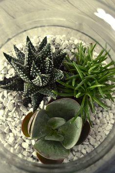Petie-amie maak je eigen terrarium