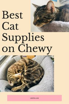 Want to get all of your cat's supplies in one place? Check out the best on Chewy! I've tested hundreds of these products and put the best of the best in this guide. Choose from healthy cat food and treats, fun cat toys, enrichment furniture, and more! Check out this cat happiness shopping guide today! Healthy Cat Food, Best Cat Food, Best Cat Litter, Litter Box, Cool Cat Toys, Cool Cats, Flea And Tick Spray, Cat Food Brands, Cat Hacks