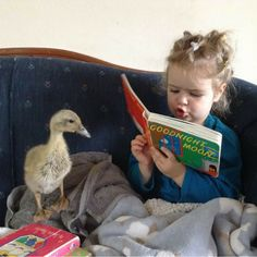 This post has the best tips for raising ducks who WANT to spend time with you!