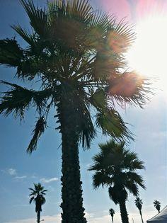Mission Beach: San Diego, CA