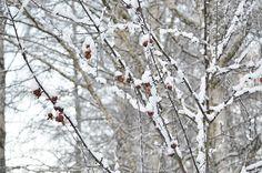 Beautiful winter time Winter Photos, Winter Time, Outdoor, Beautiful, Winter Pictures, Outdoors, Outdoor Living, Garden