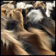 Horses On the Move |  © Don Pedro Iceland, via Flickr  It captures a total equine experience - herd and forward movement.