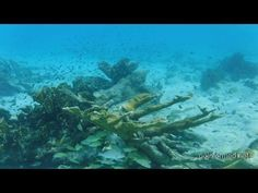 Snorkeling in Bonaire. Underwater video from the beautiful Caribbean island of Bonaire. Coral reefs and tropical fish. #bonaire #caribbean