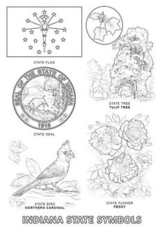 Indiana State Symbols Coloring Page From Category Select 25683 Printable Crafts Of Cartoons Nature Animals Bible And Many More