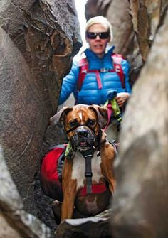Great post about an extremely fun and healthy activity for both you and your dog: Backpacking with Dogs #dog #walk #outdoors