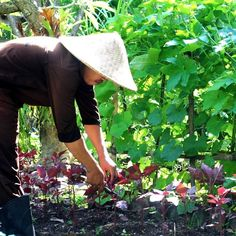 #BALI #ECOHOTELS #ORGANIC #THENWECONOMY #SWD #GREEN2STAY Desa Seni  Morning harvest! Eat organic! Support local! Think sustainability! #farmtotable - http://green2stayecotourism.webs.com/asia-pacific-eco-hotels